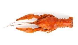 Gotowani crayfish zdjęcia stock