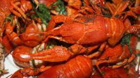Gotowani cryfish na naczyniu posiłek Zdjęcie Stock