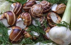 Gotowani gronowi ślimaczki w garlick kumberlandzie Zdjęcia Royalty Free