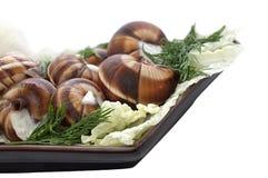 Gotowani gronowi ślimaczki w garlick kumberlandzie Obraz Stock