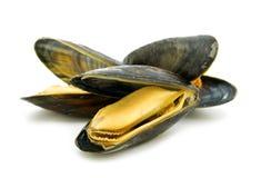 gotowani mussels Fotografia Royalty Free
