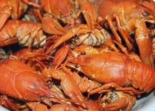 Gotowany rakowy w talerzu zbli?e? gotowani crayfish obrazy royalty free
