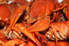 Gotowany rakowy w talerzu zbli?e? gotowani crayfish zdjęcie stock
