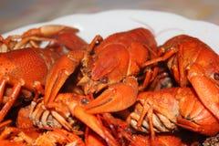 Gotowany rakowy w talerzu zbli?e? gotowani crayfish zdjęcia royalty free