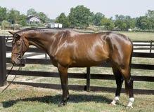 gott se för häst royaltyfri bild