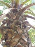 Gottschönheit in den Palmen lizenzfreie stockfotos