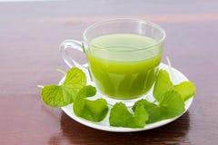 Gotu可拉树的叶子饮料 免版税库存图片