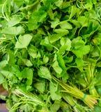 Gotu kola herb in market thailand Stock Image