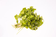 Gotu kola Royalty Free Stock Image