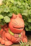 Gotu Kola Plant Herb royaltyfri fotografi