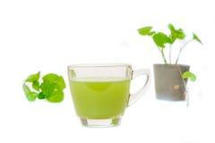 Gotu kola's leafs drink Royalty Free Stock Images