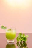 Gotu kola's leafs drink Stock Photos