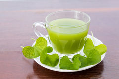 Gotu kola's leafs drink Royalty Free Stock Images