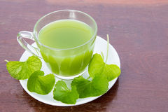 Gotu kola's leafs drink Stock Images