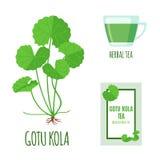 Gotu-Kolabaumsatz mit Teepaket und Tasse Tee in der flachen Art lokalisiert auf Weiß Stockfoto