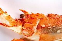 Gotujący homar zamknięty w górę zdjęcia stock