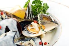 Gotujący i przygotowywający mussels Zdjęcie Stock