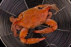 Gotujący krab. zdjęcie royalty free