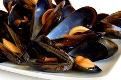 gotujący mussels zdjęcie stock