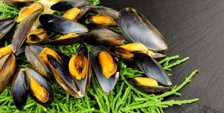 Gotujący rozłup I Mussels zdjęcia royalty free