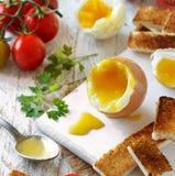 Gotujący się jajko z grzankami fotografia royalty free