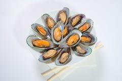 Gotujący denny mussel Zdjęcia Stock