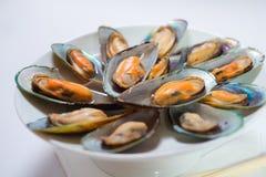 Gotujący denny mussel Obraz Stock
