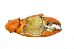 Gotujący pazura kraba Obrany w oddaleniu Obrazy Stock