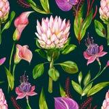 Gouache exotisch bloemen naadloos patroon met Protea, Calla, Anthurium en Fuchsiakleurig bloem op een donkere achtergrond vector illustratie