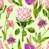 Gouache exotisch bloemen naadloos patroon met Protea, Calla, Anthurium en Fuchsiakleurig bloem op een groene achtergrond stock illustratie