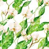 Gouache naadloos tropisch patroon met witte orchideeën en groene bladeren vector illustratie