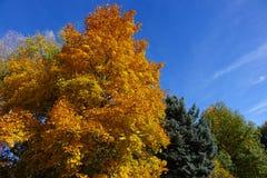Goud en Sinaasappel - Kleuren van de Herfst Stock Afbeeldingen