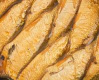 Goud ingeblikte sprotten in olie stock fotografie