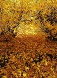 Goud van de herfst Royalty-vrije Stock Afbeeldingen