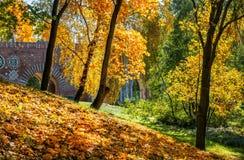 Goud van de herfstbomen Royalty-vrije Stock Afbeelding