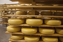 Gouda cheese wheels on shelves stock image