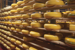 Gouda cheese wheels on shelves in a shop Royalty Free Stock Image