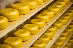 Gouda - Dutch Cheese Stock Photography