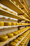 Gouda - Dutch Cheese Stock Image