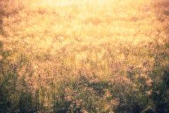 Gouden aard abstract concept als achtergrond, zachte nadruk, bokeh, wa Royalty-vrije Stock Foto's