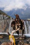 Gouden adelaar Stock Afbeelding