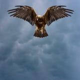 Gouden adelaar in de donkere hemel stock foto