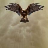 Gouden adelaar in de donkere stormachtige hemel Stock Afbeelding