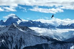 Gouden adelaar die binnen van van Zwitsers alpeslandschap het Zwitserse Alpen landschap vliegen in van Zwitserland, royalty-vrije stock afbeeldingen