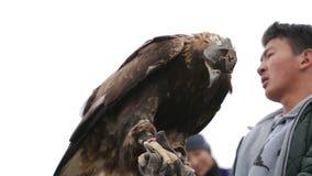 Gouden adelaar op de hand van een jonge jager stock video