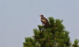 Gouden adelaars die bovenop de wereld zitten stock afbeelding