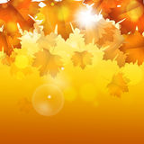 Gouden Autumn Bright Background Royalty-vrije Stock Foto