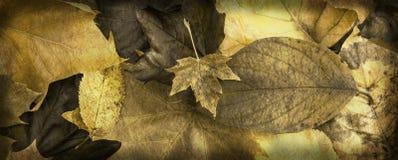 Gouden Autumn Leafy-banner Stock Afbeelding