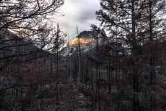 Gouden berg Stock Foto's