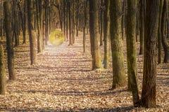 Gouden Bitcoin verlicht bomen in het bos royalty-vrije stock foto